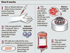 Regenerative Medicine, Red Blood Cells, Inline, Genetics, It Works, Nailed It