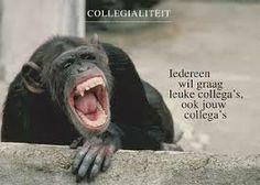 spreuken over collegialiteit 116 beste afbeeldingen van Quote   Words quotes, Best quotes en  spreuken over collegialiteit