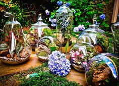 Terrariums workshops in Atlanta and surrounding cities! Book online reservations for a spot with someone on the workshop team! | ALLTHEBLOOM.COM