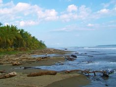 Beautiful Driftwood~~ Playa Bejuco, Costa Rica
