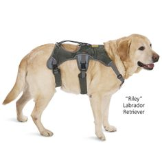"""Perfect for going up and down stairs, getting in and out of vehicles, negotiating slippery floors or climbing onto a favorite resting spot. Nylon dog assist harness features five-point adjustment for a proper, secure fit, and padded, fleece-lined straps for comfort. Generous cut allows full range of motion. The ergonomically designed, balanced lift handle makes your job easier. Reflective trim for safety. Sizes (Girth): XXS (12""""-19""""), XS (17""""-24""""), S (21""""-30""""), M (26""""-36""""), L (32""""-48"""")."""