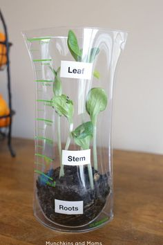A Preschool Investigation of Healthy Foods and parts of a plant.