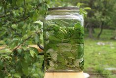 Homesteading In Maine: Making Mint Sun Tea