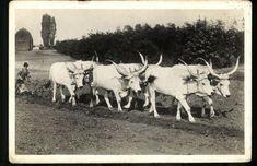 Old Photography, Hungary, Animal Pics, Hats, Fun Stuff, Autumn, Animales, Fun Things, Hat