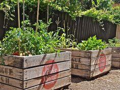 veggie patch boxes