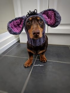 Dachshund Puppies, Dachshund Love, Dogs And Puppies, Doggies, Funny Dogs, Cute Dogs, Funny Animals, Cute Animals, Mundo Animal