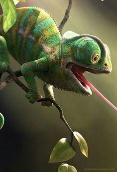 Top 5 different types of chameleons, # Amphibian activities . - animals - Top 5 different types of chameleons # Amphibians Activities - Nature Animals, Animals And Pets, Baby Animals, Funny Animals, Cute Animals, Les Reptiles, Cute Reptiles, Reptiles And Amphibians, Reptiles Preschool