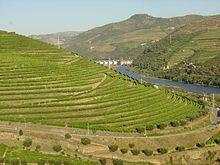 Vinhedos do Vale do Douro, Douro, Portugal!