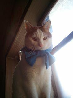 He is tied blue ribbon >.< so cute!