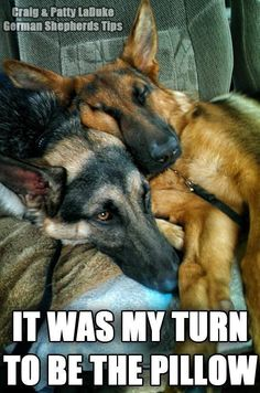 """ We are suppose to take turns at being the pillow !! """