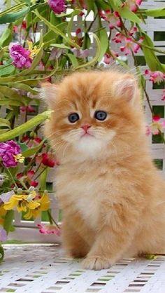 A Lovely  Cat!!!❤️