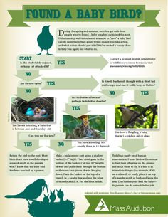 Baby bird out of nest?  Quick guide for what to DO or NOT DO.