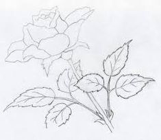 תוצאת תמונה עבור pencil drawing step by step