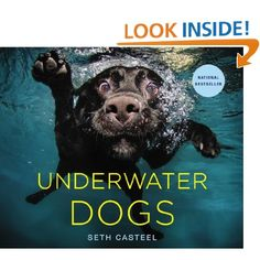 Spectacular Thrill Murray Coloring Book 17 Underwater Dogs