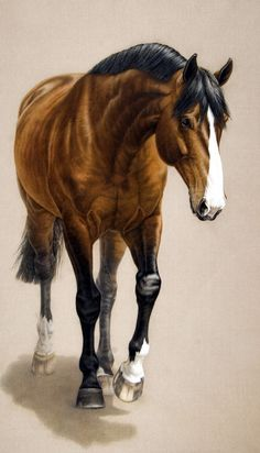 Equine Art - Painting of horse named Amaretto d'Arco. - by artist Susan Van Wagoner