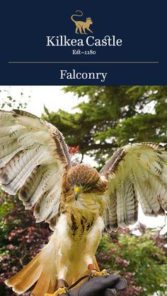 Falcony offers guests a memorable, hands-on encounter with trained birds of prey. Book your reservation today!