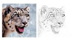 Snow Leopard Coloring Zoo Animal Coloring Pages, Snow Leopard, Zoo Animals, Colored Pencils, Art, Colouring Pencils, Art Background, Kunst, Performing Arts