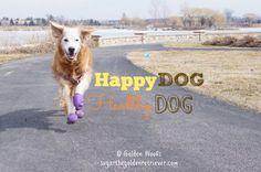 Happy DOG = Healthy DOG