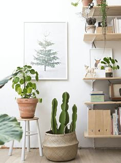 Indoor plants design makes your living space more comfortable, breathable, and luxurious. See these 30 ideas on how to display houseplants for inspiration. Interior Plants, Interior And Exterior, Interior Rendering, Interior Design, Cactus E Suculentas, Boho Deco, Boho Chic, White Plants, Big Plants