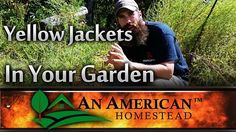 What to do with Yellow Jackets in your Garden? - An American Homestead