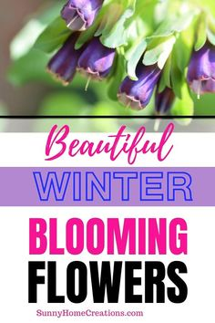 Outdoor Landscaping, Outdoor Gardens, Repotting Succulents, Winter Flowers, Blooming Flowers, Flower Ideas, Winter Garden, Outdoor Ideas, Planting Flowers