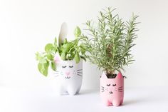 Transform soda bottles into planters that look like cats.