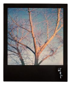 Wallace Polsom, Rising Shadows at Sundown (13 March 2016), instant photo taken with a vintage SX-70 Land Camera and Impossible Project SX-70 colour film with black frames.