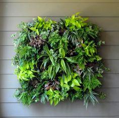 Grow Vertical! Wall Gardens Make Great Living Art --> http://www.hgtvgardens.com/decorating/living-walls-make-gardening-evergreen?soc=pinterest