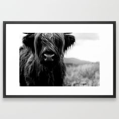 Buy Scottish Highland Cattle Baby - Black and White Animal Photography Framed Art Print by regnumsaturni. Worldwide shipping available at Society6.com. Just one of millions of high quality products available.