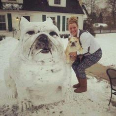 Un bouledogue de neige, via HuffingtonPost