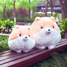 Cheap gift binoculars, Buy Quality gift card for sale directly from China doll trade Suppliers: Simulation Stuffed Animal Cute plush stuffed simulation Pomeranian dog toys doll birthday christmas gift present for kids Presents For Dog Lovers, Presents For Kids, Dog Lover Gifts, Corgi Pictures, Cute Corgi, Cute Plush, Cartoon Dog, Dog Toys, Dinosaur Stuffed Animal
