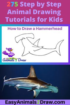 Learn how to draw an amazing Hammerhead Shark with this easy and inspirational step-by-step drawing tutorial for kids of all ages! Start by drawing the head. Draw a curved line in graphite pencil.