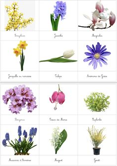 Diy Montessori, Activities For Kids, Crafts For Kids, Outdoor Education, Flower Names, Art Boards, Planting Flowers, Nature, Image