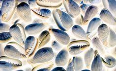 Bright Shells