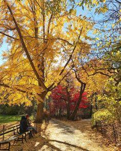 Central Park in NYC by Scott Lipps @scottlipps   New York City Feelings   Bloglovin'