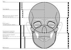 череп построение по баммесу - Поиск в Google