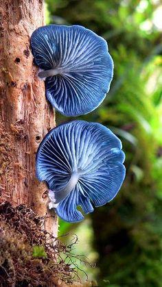 Blue gills - lovely nature!