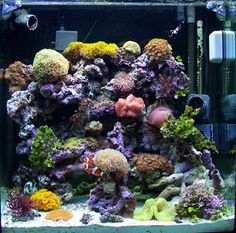 1000 images about aquariums on pinterest red green for Starting a saltwater fish tank