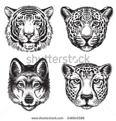 Black and white vector line drawings of wild animal faces: Cheetah, Leopard, Tiger and Wolf
