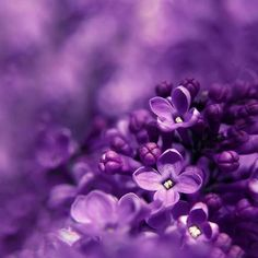 244dbc592a 203 Best Purplicious images