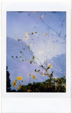 Giovanna Santinolli - My Pin Aesthetic Photography, Poloroid Pictures, Art Photography, Photo, Wallpaper, Aesthetic Iphone Wallpaper, Art, Aesthetic Wallpapers, Pictures