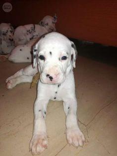 MIL ANUNCIOS.COM - Regalan cachorros. Compra-venta de perros regalan cachorros en Granada. Regalo de cachorros..