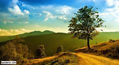 Orman Resimlerinden orman manzaraları, dağ manzaraları, orman resimleri, çok güzel manzaralar, manzara görselleri, orman fotoğrafları benzeri konulardaki en güzel orman resimleri ni sizler için derledik, birbirinden güzel orman resimlerine aşağıdan ulaşabilirsiniz. #orman #forest #nature   http://kpssdelisi.com/orman-resimleri/