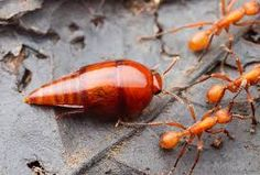 Image result for ant colony