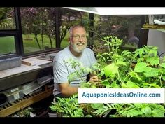 Easy DIY Aquaponics program (created by Andrew Endres) is designed to help a beginner and those experienced to build an aquaponics system at home. You will find the step-by-step manual and instruction video to be very complete, and you will be provided with all the information on all the materials you will need to set up the equipment and system.