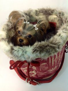 So Cozy in a stylish fur-trimmed carrier...can't get much warmer than that...