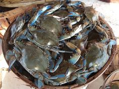 MARYLAND STEAM CRABS | 1970, Gaffney's crabs has been bringing you the best in fresh crabs ...