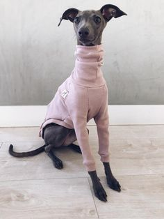 italian greyhound and whippet clothes / iggy clothes / Dog Sweater / ropa para galgo italiano y whippet / PALE PINK Perro Whippet, Whippet Puppies, Dogs And Puppies, Whippets, Doggies, Italian Greyhound Clothes, Italian Greyhound Puppies, Rat Dog, Grey Hound Dog
