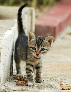 I love cats and kittens of all ages. If I were on a farm, I'd never have enough.
