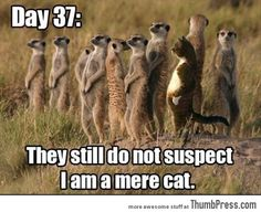 Funny Animal Pictures 30 45 Absolutely Hilarious Pictures of Animals to Make You Laugh